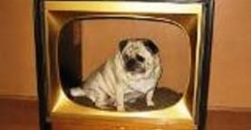Cachorro e televisão